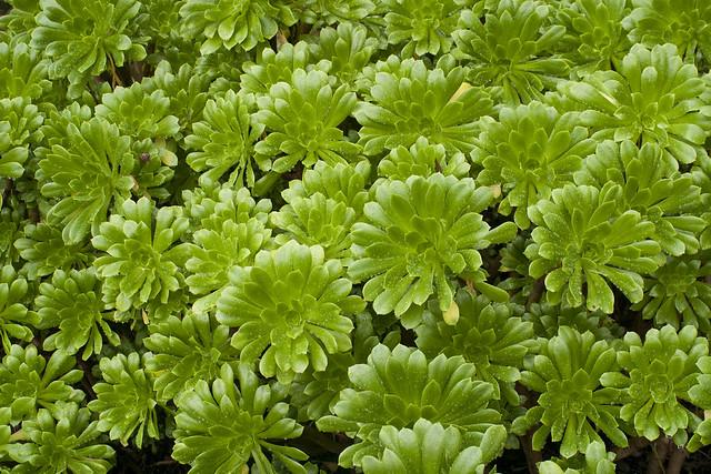 Jardim de plantas suculentas  Flickr  Photo Sharing!