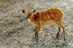 Rani Bagh Zoo