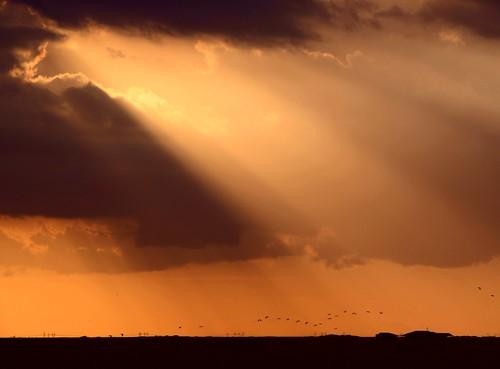light sunset house nature birds skyscape colorful unitedstates florida hometown flock ibis sunrays southflorida allxpressus coralspringsflorida gloryoflight