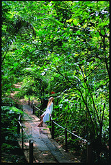 Walk and reflect in the rainforest