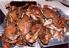 crab boil(0.0), seafood boil(0.0), fish(0.0), dungeness crab(0.0), homarus(0.0), american lobster(0.0), crab(1.0), animal(1.0), crustacean(1.0), seafood(1.0), invertebrate(1.0), food(1.0), soft-shell crab(1.0),