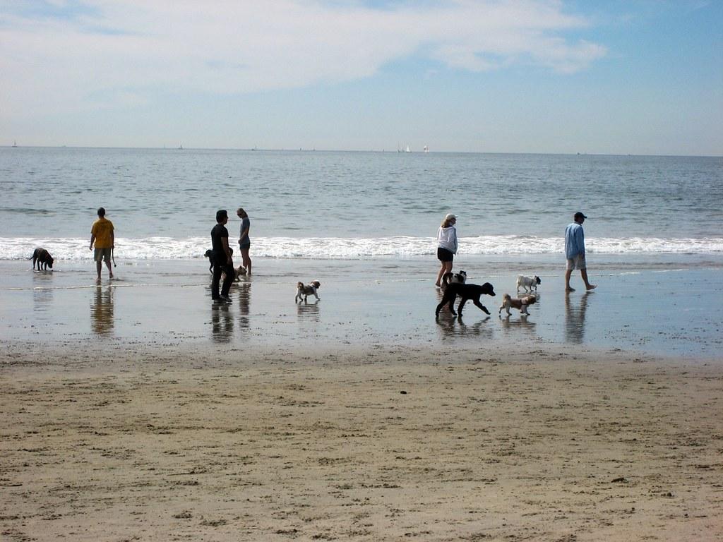 San Diego Dog Beach 3