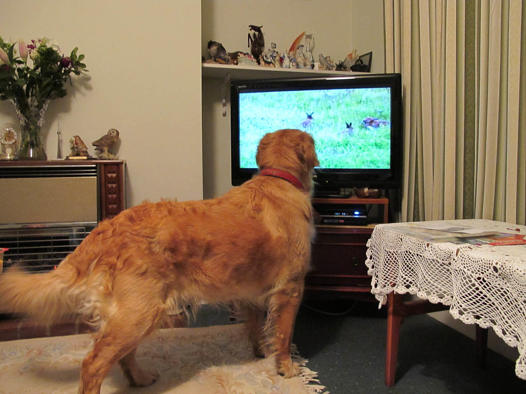 Dog TV - the cure for separation anxiety?