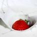 Strawberry & Yogurt by Fear_Through_The_Eyes