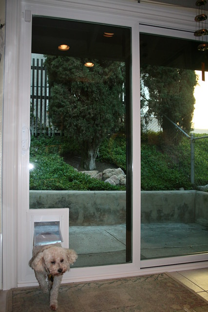 Sliding Glass Door with Dog Door 333 x 500