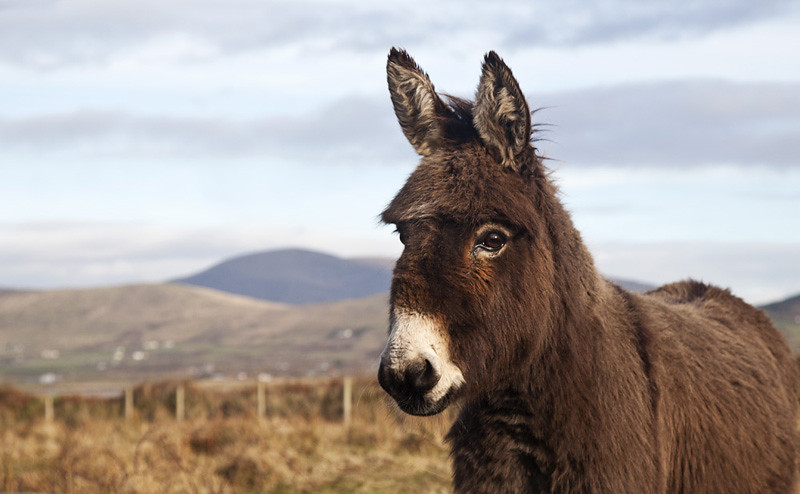 Dingle Donkey | Flickr is n't working for me for the past fe… | Flickr