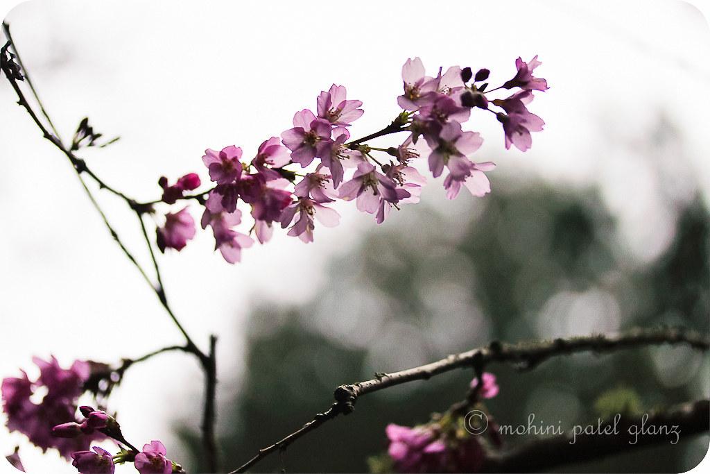 arboretum blossoms #5