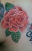 rose Tattoo of a