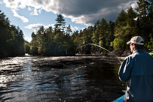 Maine penobscot river fly fishing west branch penobscot for Fly fishing maine