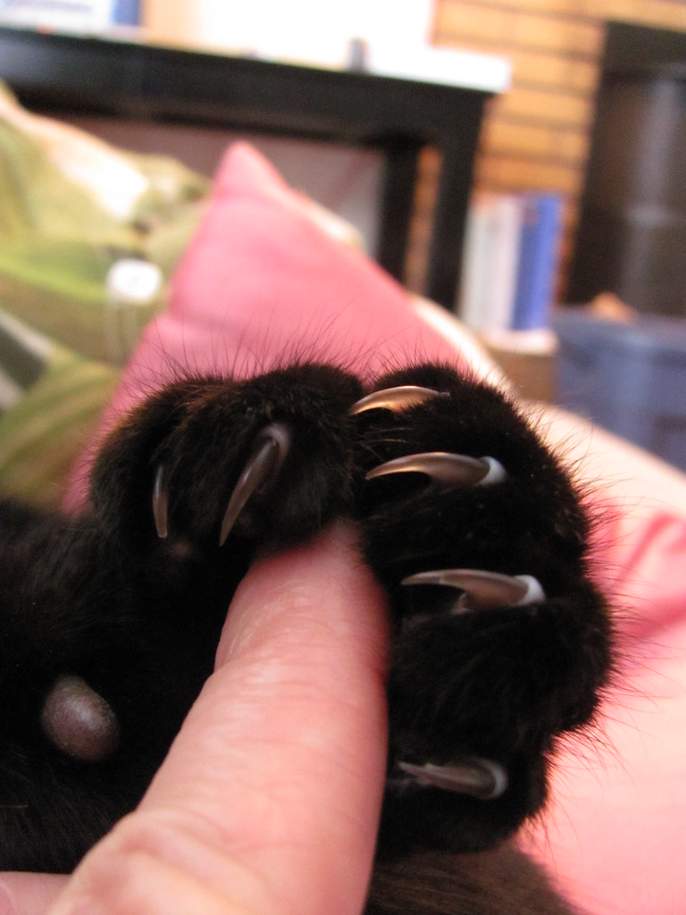 Cat Climber Black Friday Uk