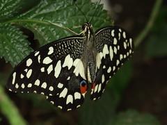 Butterfly World EH18 1AZ
