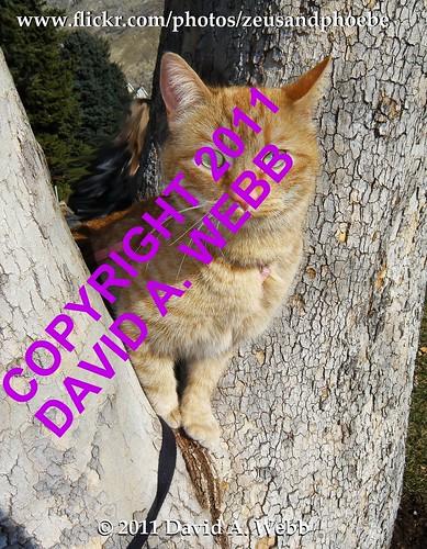 red usa pet cats pets tree yellow cat mackerel golden ginger utah chats kitten feline chat flickr tabby kitty whiskers phoebe gato gata felines spotted provo striped furbaby gatas furbabies anawesomeshot impressedbeauty catnipaddicts