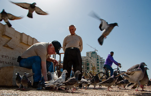 Near the sea of Tel- Aviv