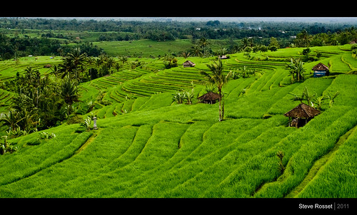 world travel bali green heritage buildings indonesia landscape geotagged asia view rice farm traditional farming steps terraces structures vivid unesco exotic tropical production remote growing february lush 2011 jatiluwih steverosset