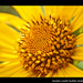Una flor por la amistad / One flower for the friendship by Lizzie Gt ♥ God bless you!!!