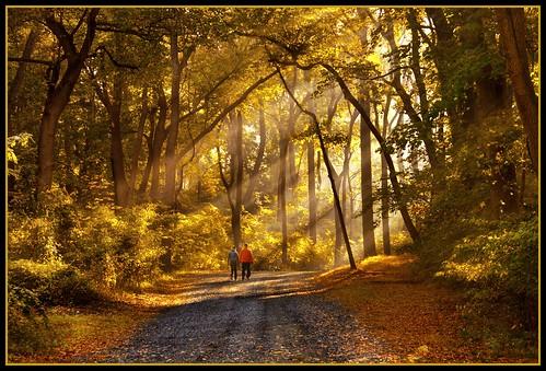 newjersey woods explore monmouthcounty sunrays challengeyouwinner