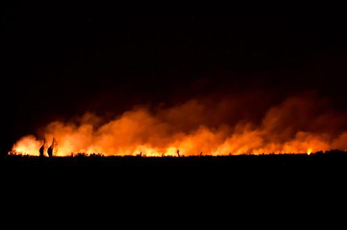 Wildfire by blinken