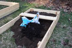 pea planting  IMG_7299