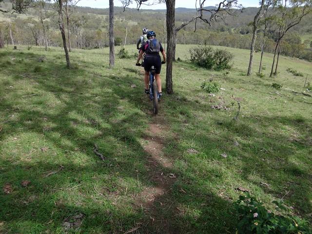 Bovine Single Track