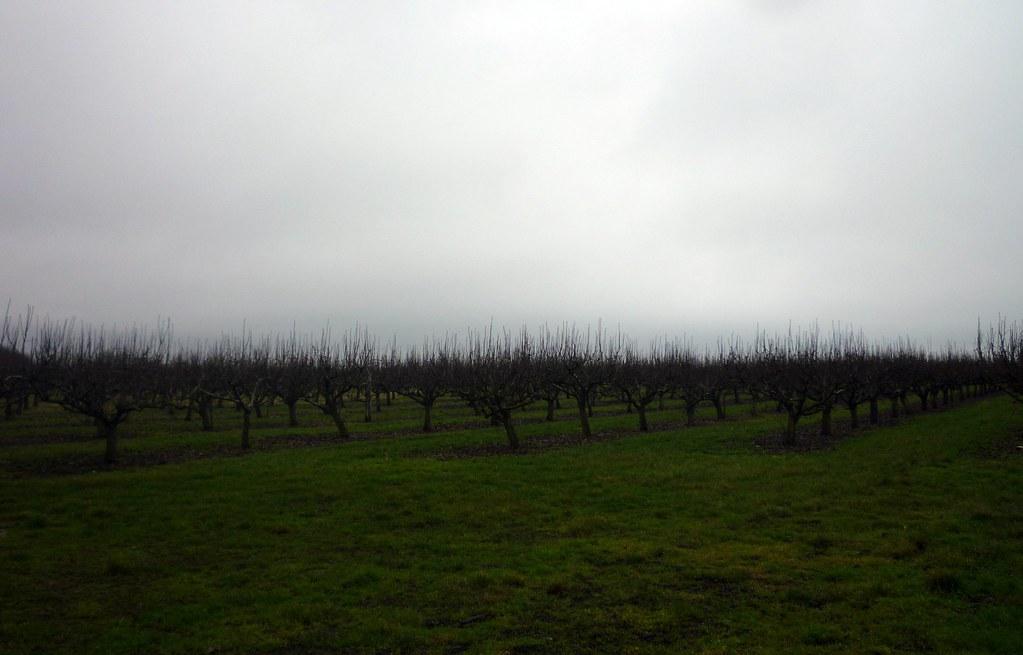 Pattern Orchard.