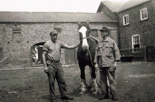 1944 04 29_Italian POWs with Horse at Gribthorpe - Copy