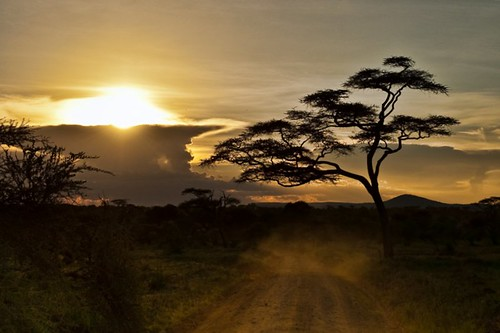 Early morning in the Serengeti
