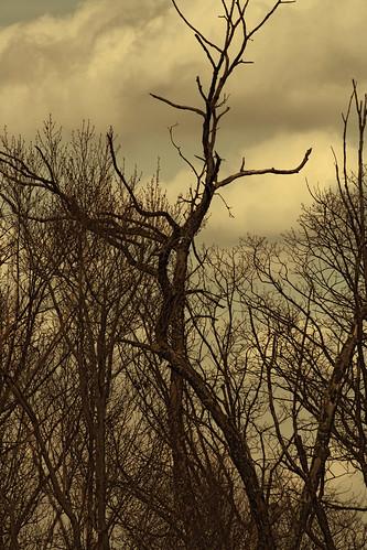 tree dark dead