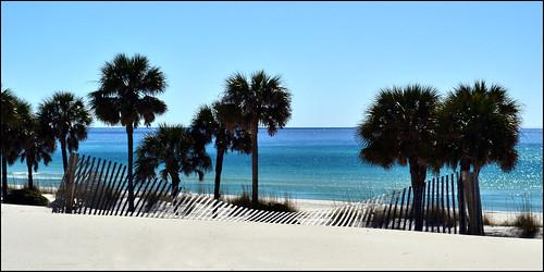 beach sand florida palmtrees panamacitybeach fiestabeach nikond3100 nikkor1855afsvrlens