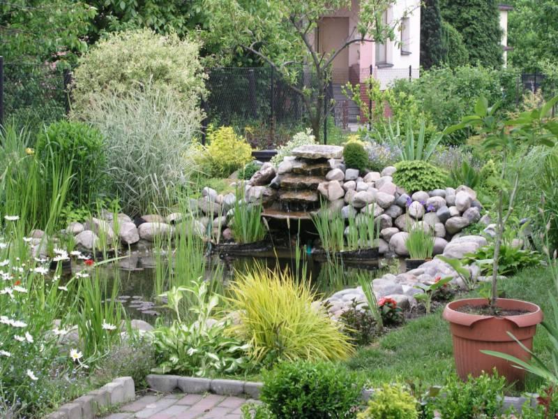 Jardin acuático by Nowis