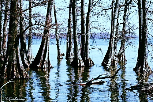 trees lake earthquake tennessee lakecounty reelfootlake