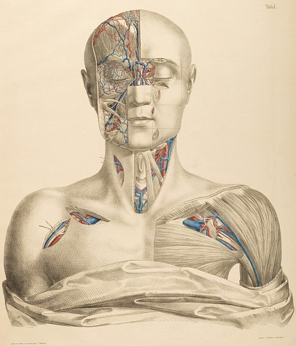 Surgical-Anatomical Tables by Anton Nuhn, 1846