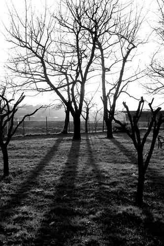 trees winter sunset blackandwhite bw italy monochrome grass alberi countryside blackwhite italia tramonto shadows bn ombre campagna modena inverno prato biancoenero emiliaromagna 2011 nikon18200 123bw nikond40 antoniotrogu viaflickrqcom
