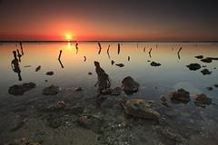 Kuwait - Low Tide Sunrise