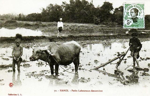 Hanoi - Petits Laboureurs annamites
