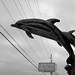 Dolphins, Beaverton, Oregon