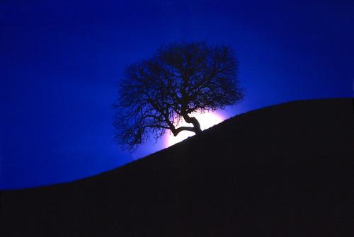 moon nature night landscape spring sonoma fullmoon moonrise sonomacounty winecountry buckeye pineflatroad