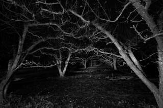 night-orchard