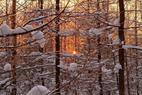 winter sunset tree forest canon suomi finland halo 7d february talvi puu metsä laukaa 24105 auringonlasku suomalainen helmikuu valkola anttospohja talvenihmemaa finnishwinterwonderland