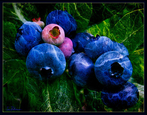 The Blueberries were Simply Electric this past Summer