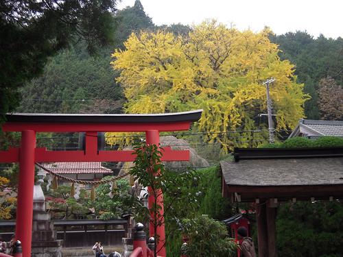 天河大弁財天社 - Tenkawa Shrine // 2010.11.14 - 07