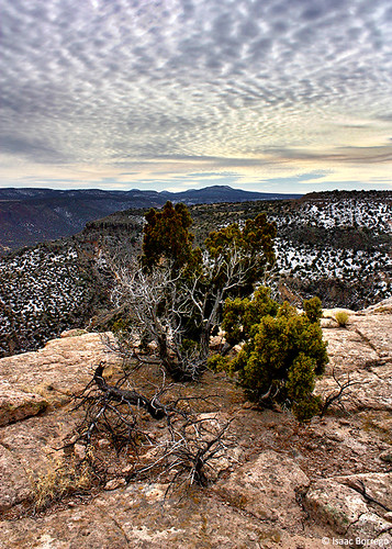 trees winter sky plants newmexico clouds canon geotagged eos rebel rocks january whiterock canyons mesa mesas xsi 2011 geo:lat=35835524 geo:lon=106178673