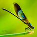 Amazing Damsels...female
