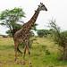 RAPlanet - Africa Overland