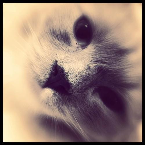 kitten dreaming