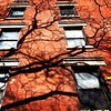 Yet another branch in the #wall #NYC #SoHo #instantaneo by Jaime K Scatena