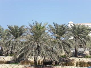 Entdeckungsreisen nach Abu Dhabi kommen vorwärts ohne zu ermüden 1272