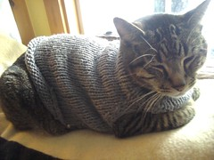 Rascal the Cat in HandKnit Sweater