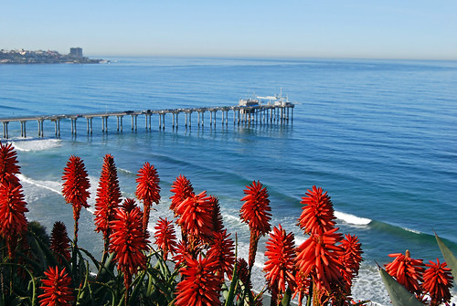 ocean flowers coast pier nikon pacific sandiego socal bloom pilz8