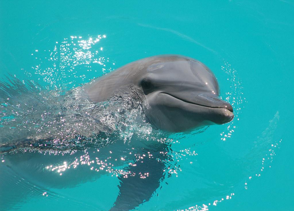 Dolphinaris 2