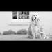 Iris & Dog by Paul Wilkinson Photography